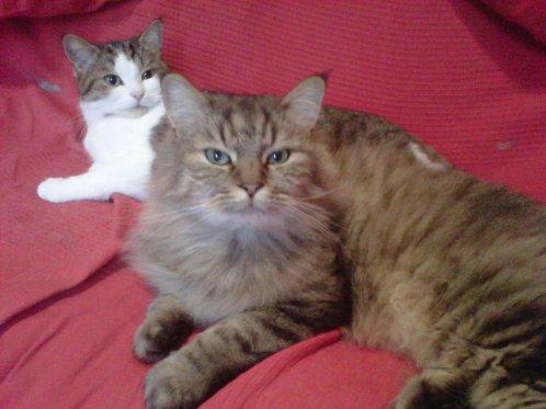 Lynx et Oulipop2